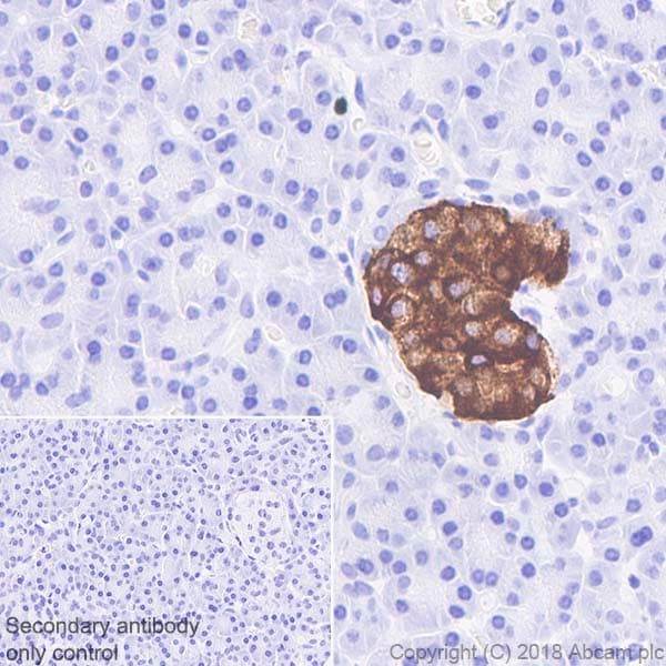 Immunohistochemistry (Formalin/PFA-fixed paraffin-embedded sections) - Anti-PC1/3 antibody [EPR21908] (ab220363)