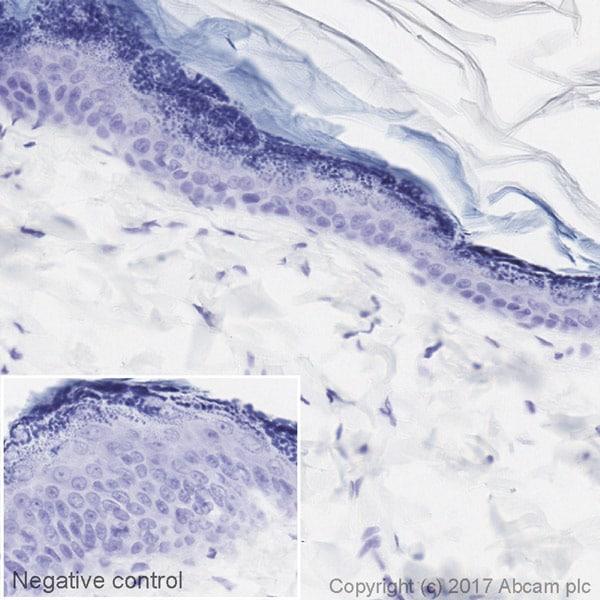 Immunohistochemistry (Formalin/PFA-fixed paraffin-embedded sections) - HRP Anti-BrdU antibody [BU1/75 (ICR1)] (ab220507)
