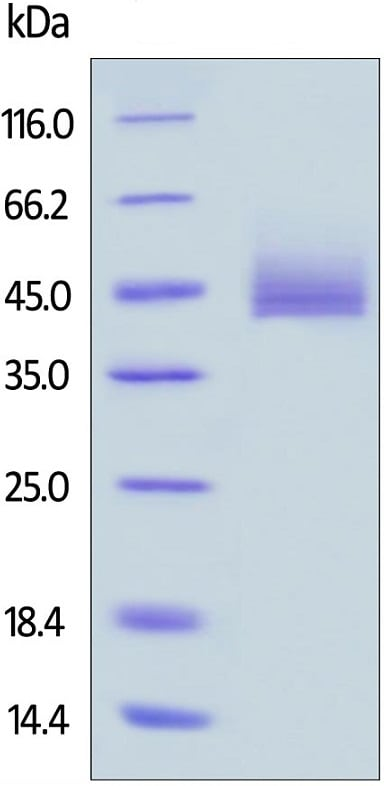 Nucleotide Array - Recombinant human CD3 protein (Active) (ab220577)