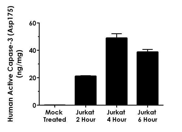 Comparison of staurosporine treated Jurkat cell extracts collected at different time points during treatment.