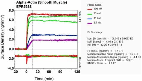 OI-RD Scanning - Anti-alpha smooth muscle Actin antibody [EPR5368] - BSA and Azide free (ab220795)