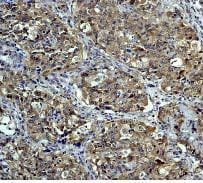 Immunohistochemistry (Formalin/PFA-fixed paraffin-embedded sections) - Anti-NEDD8 antibody [Y297] - BSA and Azide free (ab220816)