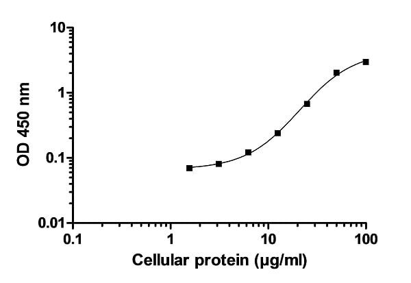 Example of p38 MAPKa cell lysate standard curve