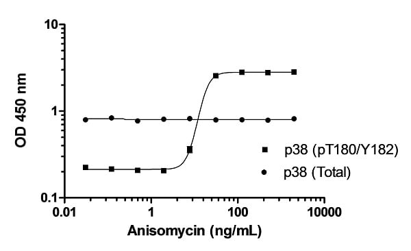 Induction of p38 MAPKa (pT180/Y182) phosphorylation in HeLa cells in response to anisomycin treatment