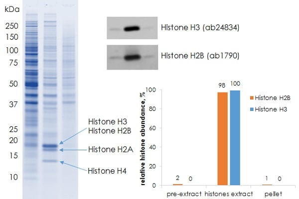 Histone extraction from HeLa cells