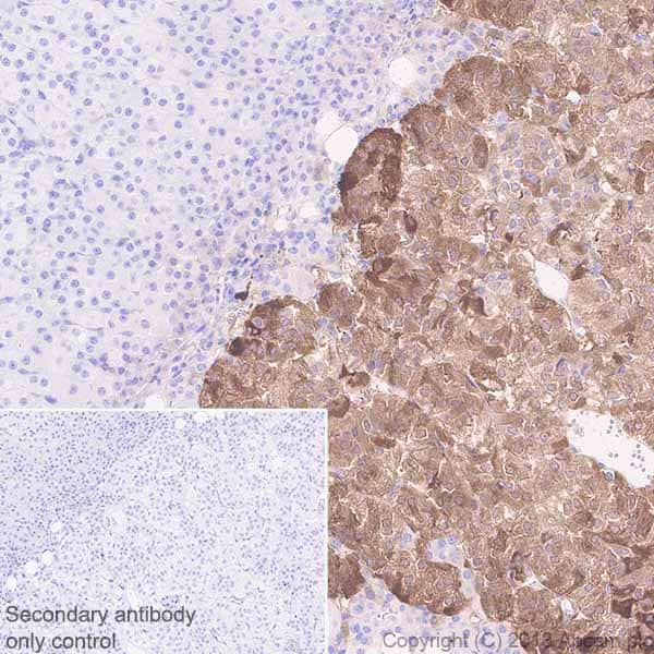 Immunohistochemistry (Formalin/PFA-fixed paraffin-embedded sections) - Anti-Neuropeptide Y antibody [EPR21877] (ab221145)