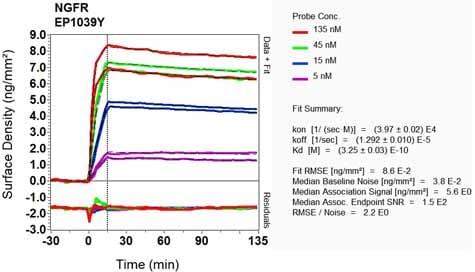 Other - Anti-p75 NGF Receptor antibody [EP1039Y] - Low endotoxin, Azide free (ab221212)