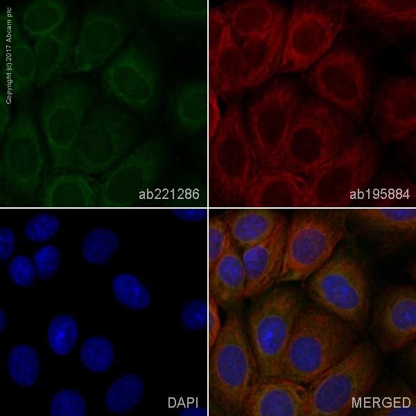 Immunocytochemistry/ Immunofluorescence - Anti-Aspartate Aminotransferase + FABP-1 antibody [EPR12145] (Alexa Fluor® 568) (ab221286)