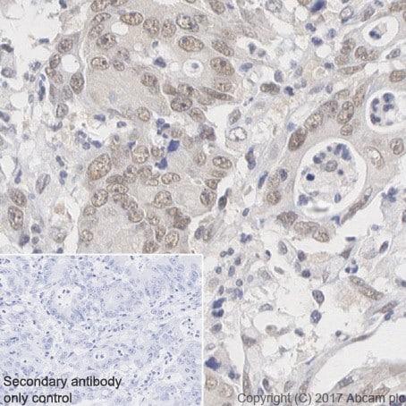 Immunohistochemistry (Formalin/PFA-fixed paraffin-embedded sections) - Anti-RBX1 antibody [EPR20185] (ab221548)