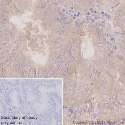 Immunohistochemistry (Formalin/PFA-fixed paraffin-embedded sections) - Anti-PKC alpha antibody [Y124] - BSA and Azide free (ab221611)