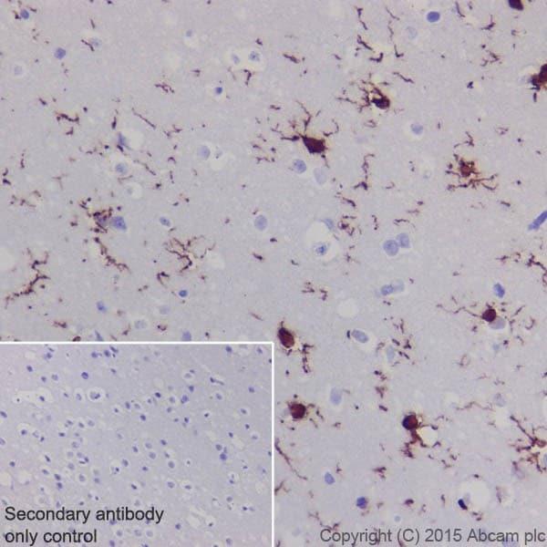 Immunohistochemistry (Formalin/PFA-fixed paraffin-embedded sections) - Anti-Iba1 antibody [EPR16589] - BSA and Azide free (ab221790)