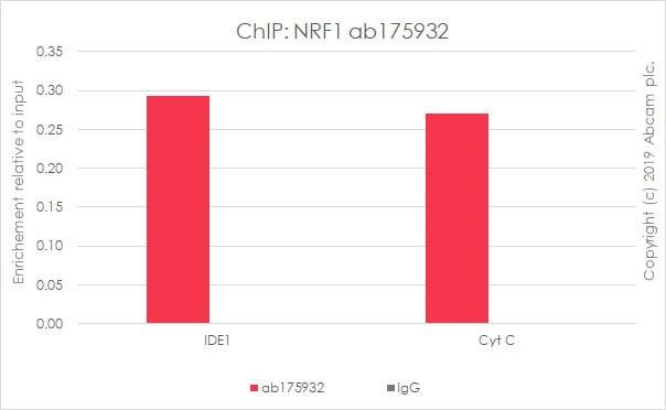 ChIP - Anti-NRF1 antibody [EPR5554(N)] - BSA and Azide free (ab221792)