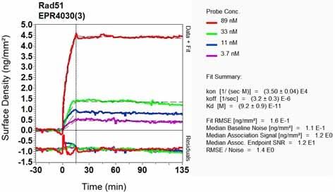 Other - Anti-Rad51 antibody [EPR4030(3)] - BSA and Azide free (ab221796)