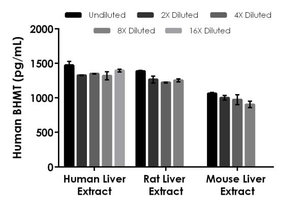 Interpolated concentrations of native BHMT in human, rat and mouse samples based on a 31, 6.3, and 0.5 µg/mL extract load.