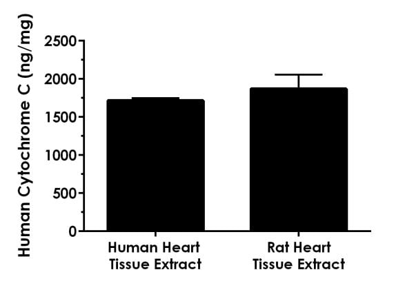 Reactivity in human and rat heart tissue extracts