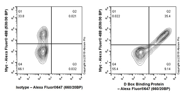 Flow Cytometry - Anti-D Box Binding Protein antibody [EPR22370-51] (ab222112)