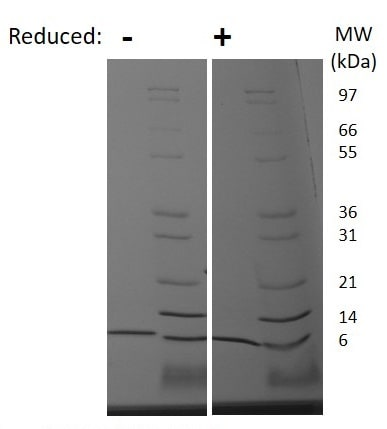 SDS-PAGE - Recombinant Mouse CXCL2 protein (ab222182)