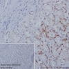 Immunohistochemistry (Formalin/PFA-fixed paraffin-embedded sections) - Anti-Dnmt1 antibody [EPR18453] - BSA and Azide free (ab222228)