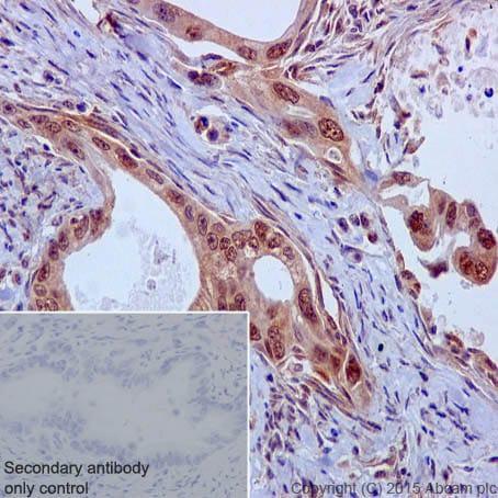 Immunohistochemistry (Formalin/PFA-fixed paraffin-embedded sections) - Anti-Caspase-9 antibody [EPR18107] - BSA and Azide free (ab222231)
