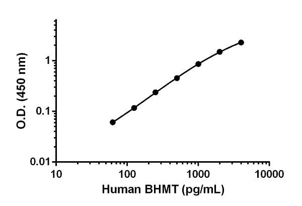 Human BHMT Standard Curve