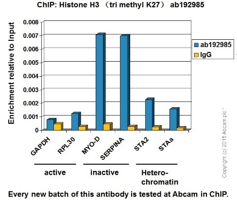 ChIP - Anti-Histone H3 (tri methyl K27) antibody [EPR18607] - BSA and Azide free (ab222481)