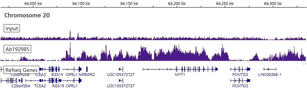 ChIP-sequencing - Anti-Histone H3 (tri methyl K27) antibody [EPR18607] - BSA and Azide free (ab222481)