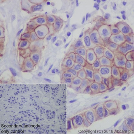 Immunohistochemistry (Formalin/PFA-fixed paraffin-embedded sections) - Anti-Claudin 3 antibody [EPR19971] - BSA and Azide free (ab222485)