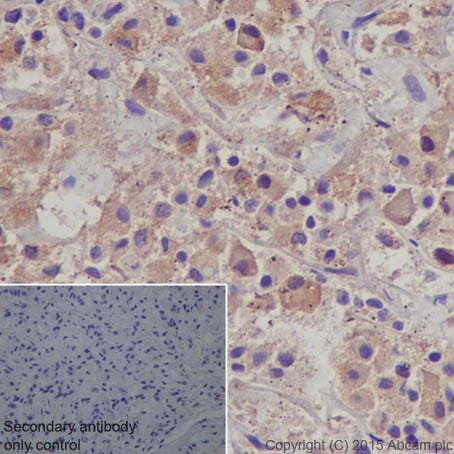 Immunohistochemistry (Formalin/PFA-fixed paraffin-embedded sections) - Anti-POMC antibody [EPR17571] - BSA and Azide free (ab222486)