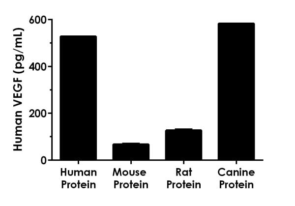 Other species reactivity was determined by measuring a 500 pg/mL protein load of various species recombinant VEGF proteins.