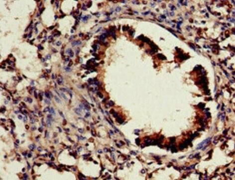 Immunohistochemistry (Formalin/PFA-fixed paraffin-embedded sections) - Anti-Cdx4 antibody (ab222909)