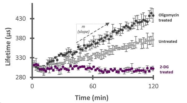 Extracellular acidification of A549 cells treated with 2-DG (purple) and oligomycin (black).