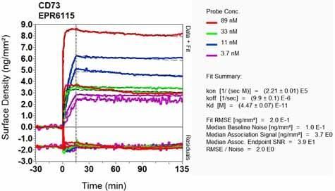 Other - Anti-CD73 antibody [EPR6115] - Low endotoxin, Azide free (ab222966)