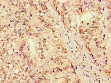 Immunohistochemistry (Formalin/PFA-fixed paraffin-embedded sections) - Anti-AH2 antibody (ab223032)