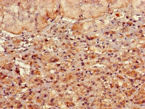 Immunohistochemistry (Formalin/PFA-fixed paraffin-embedded sections) - Anti-RMND1 antibody (ab223119)