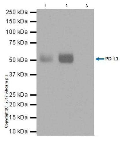 Immunoprecipitation - Anti-PD-L1 antibody [EPR20529] - BSA and Azide free (ab223141)