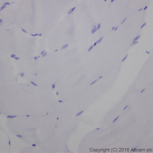 Immunohistochemistry (Formalin/PFA-fixed paraffin-embedded sections) - Anti-Cardiac Troponin I antibody [EPR20307] - BSA and Azide free (ab223149)