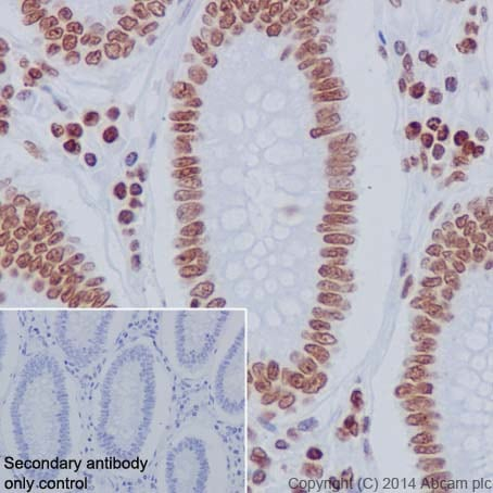 Immunohistochemistry (Formalin/PFA-fixed paraffin-embedded sections) - Anti-Histone H2A.Z antibody [EPR18090] - BSA and Azide free (ab223152)