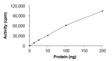Functional Studies - Recombinant human EGFR (mutated T790 + C797 + L858) protein (Active) (ab223159)