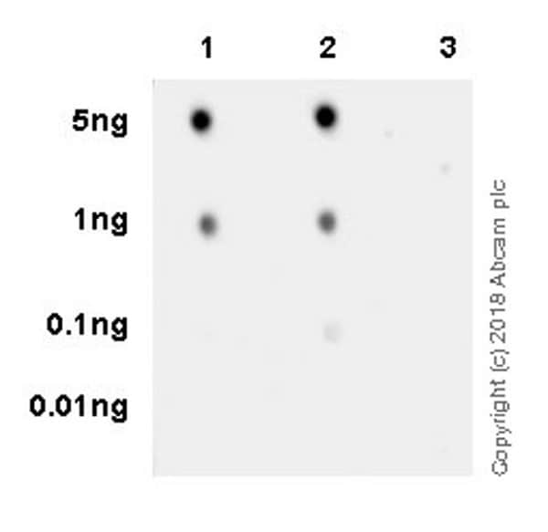 Dot Blot - Anti-BRD2 (phospho S37) antibody [EPR22114] (ab223255)
