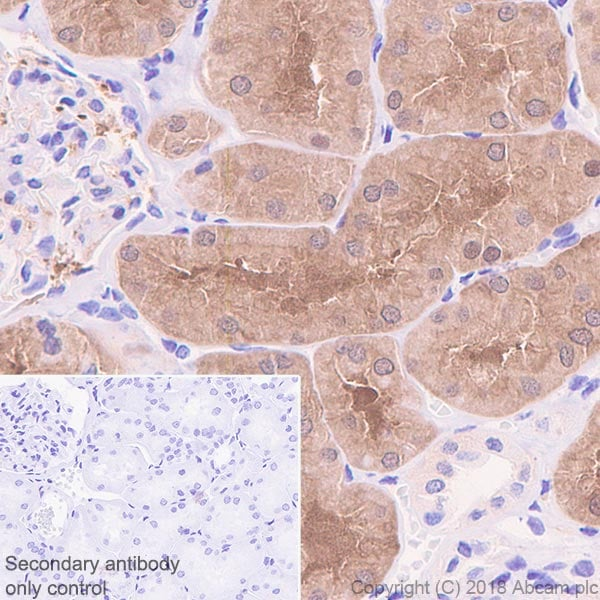 Immunohistochemistry (Formalin/PFA-fixed paraffin-embedded sections) - Anti-ASPA antibody [EPR22072] (ab223269)