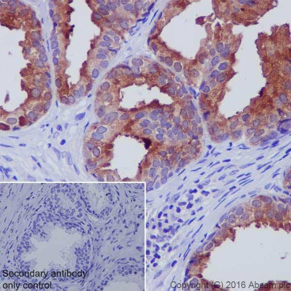 Immunohistochemistry (Formalin/PFA-fixed paraffin-embedded sections) - Anti-GDF15 antibody [EPR19939] - Low endotoxin, Azide free (ab223539)