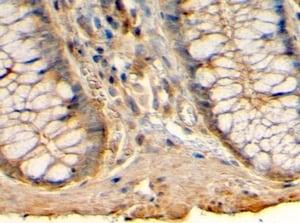 Immunohistochemistry (Formalin/PFA-fixed paraffin-embedded sections) - Anti-HRH1/H1R antibody (ab223655)