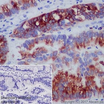 Immunohistochemistry (Formalin/PFA-fixed paraffin-embedded sections) - Anti-Gastric Mucin/MUC-6 antibody [EPR20623] (ab223846)