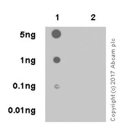 Dot Blot - Anti-PAK1 (phospho T212) antibody [EPR20045] (ab223852)