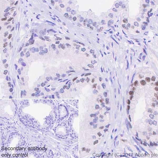 Immunohistochemistry (Formalin/PFA-fixed paraffin-embedded sections) - Anti-PAK1 (phospho T212) antibody [EPR20045] (ab223852)