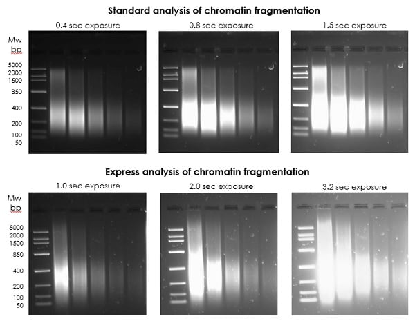 Analysis of chromatin fragmentation following 15min of sonication