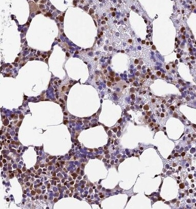 Immunohistochemistry (Formalin/PFA-fixed paraffin-embedded sections) - Anti-TRIM22 antibody (ab224059)