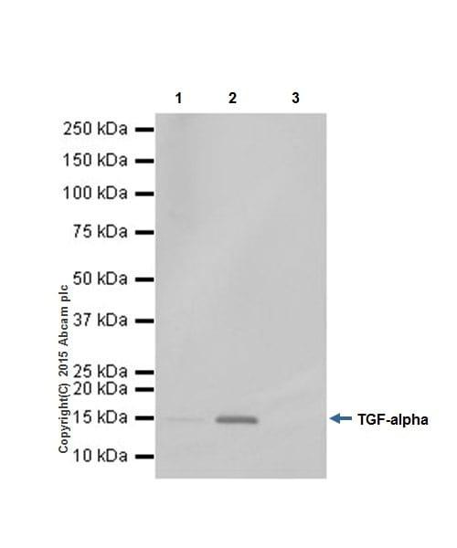 Immunoprecipitation - Anti-TGF alpha antibody [EPR15346] - BSA and Azide free (ab224266)