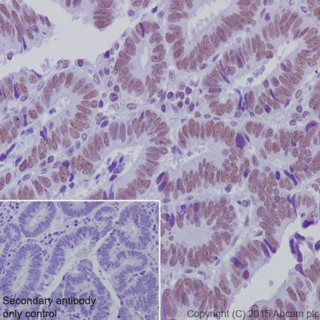 Immunohistochemistry (Formalin/PFA-fixed paraffin-embedded sections) - Anti-KDM1 / LSD1 antibody [EPR6825] - BSA and Azide free (ab224270)