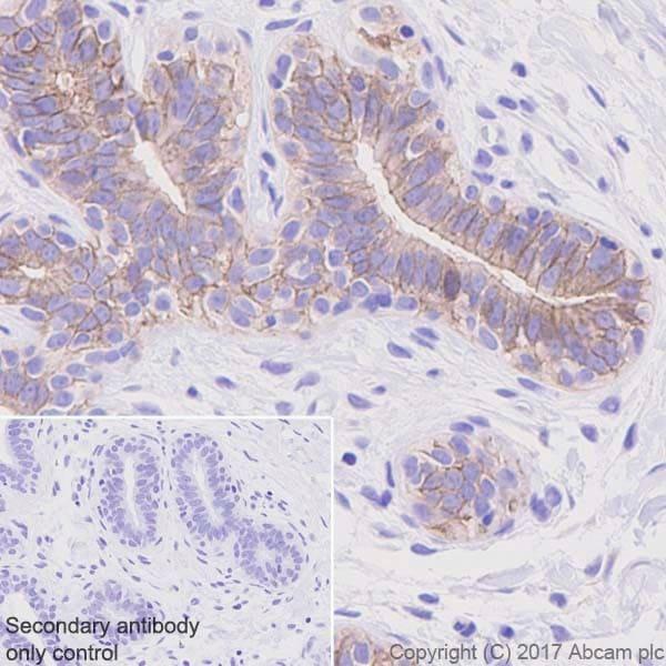 Immunohistochemistry (Formalin/PFA-fixed paraffin-embedded sections) - Anti-Occludin antibody [EPR20992] - BSA and Azide free (ab224526)